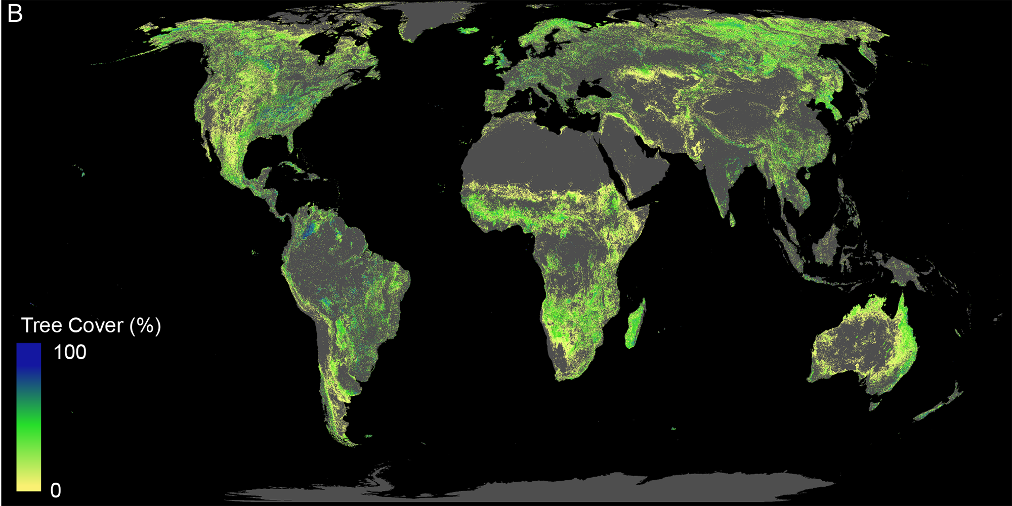 Massive Forest Restoration Could Greatly Slow Global Warming - Scientific  American