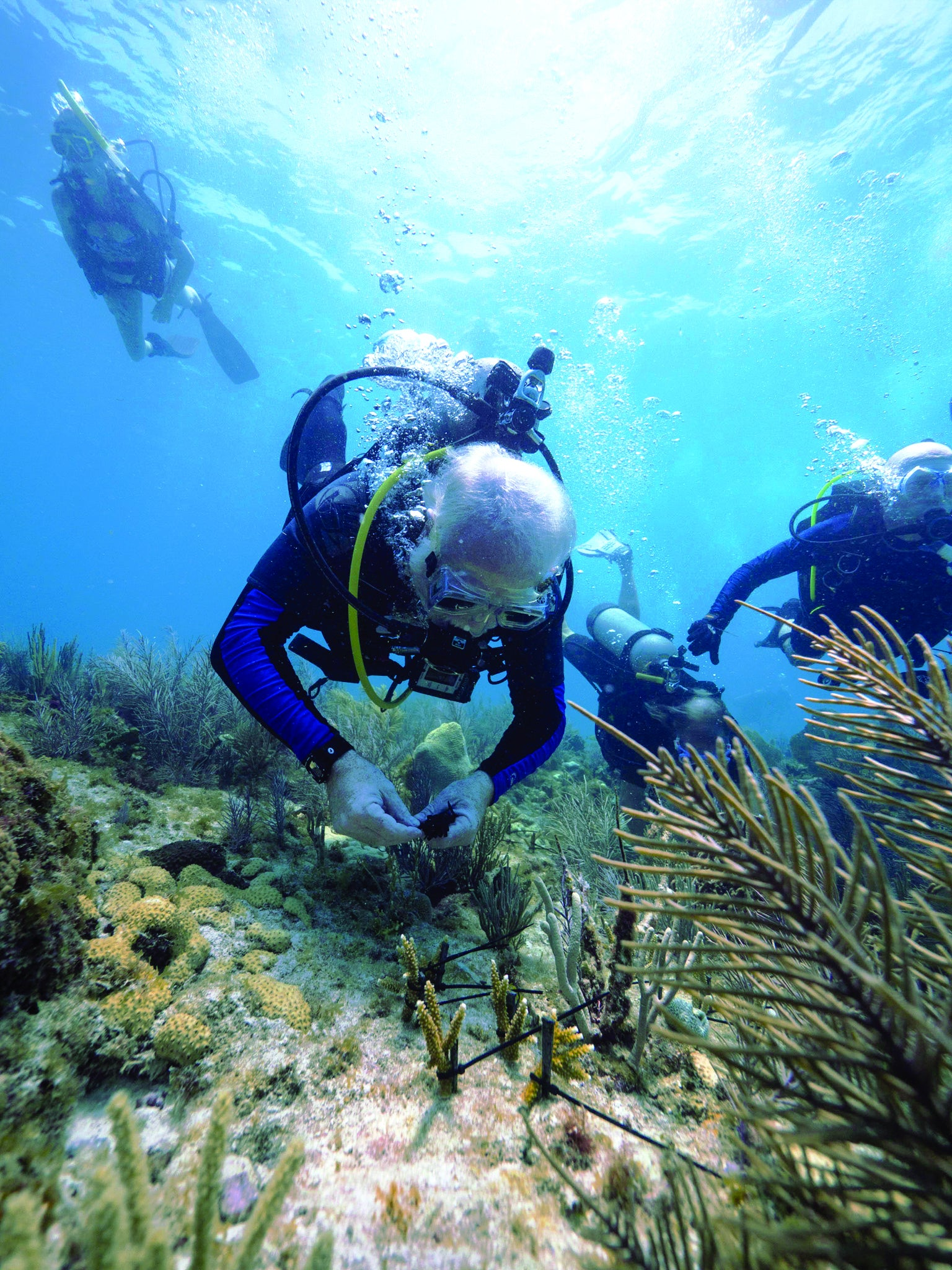 Scientists Are Taking Extreme Steps to Help Corals Survive
