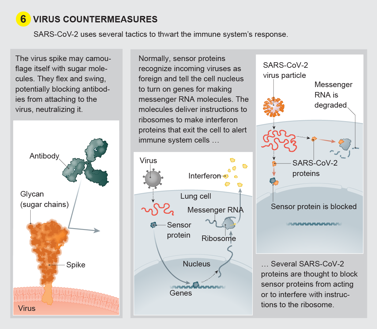 Virus countermeasures