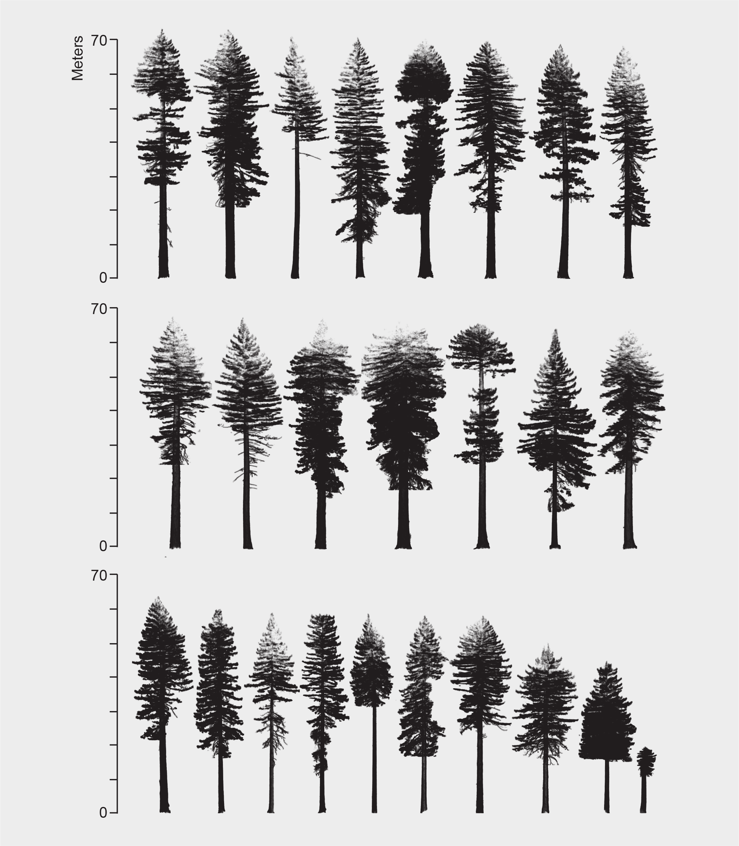 3D Measurements of Large Redwood Trees for Biomass and Structure