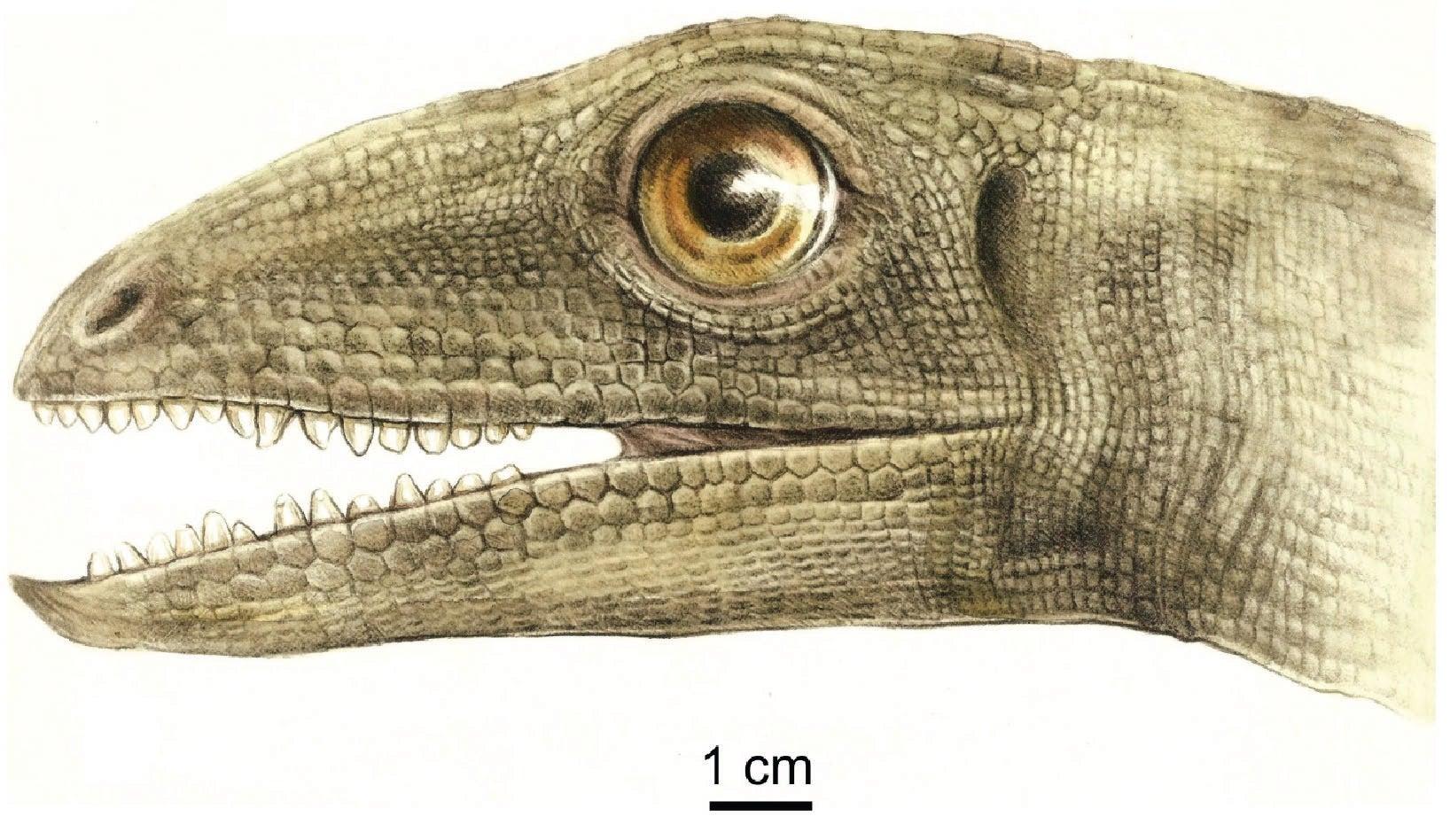 An artist's depiction of Silesaurus.