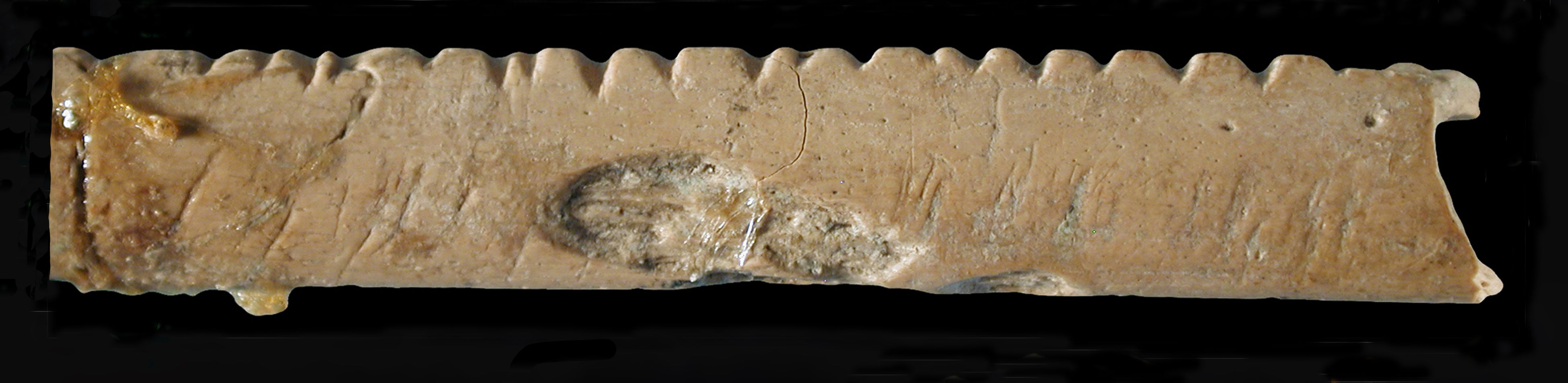 Notches cut into this baboon bone some 40,000 years ago.