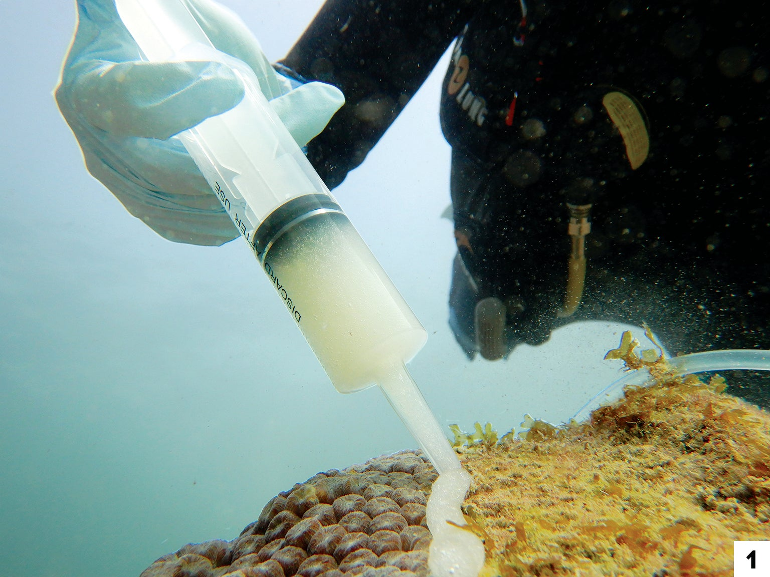 Researcher Kelly Pitts applies a paste laden with a single probiotic onto corals off the Florida coast