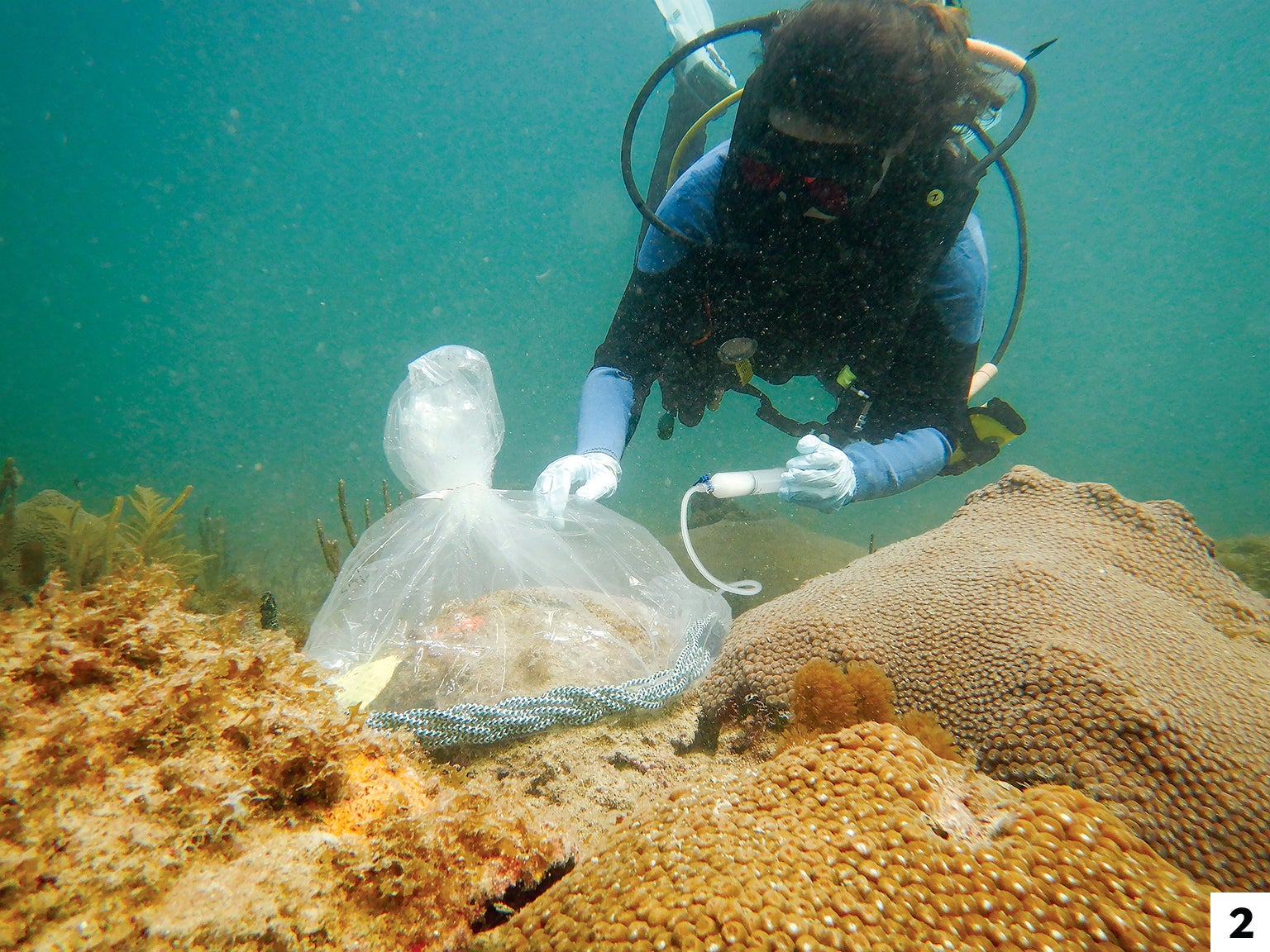 Researcher Kelly Pitts pumps a liquid form of probiotic onto corals off the Florida coast