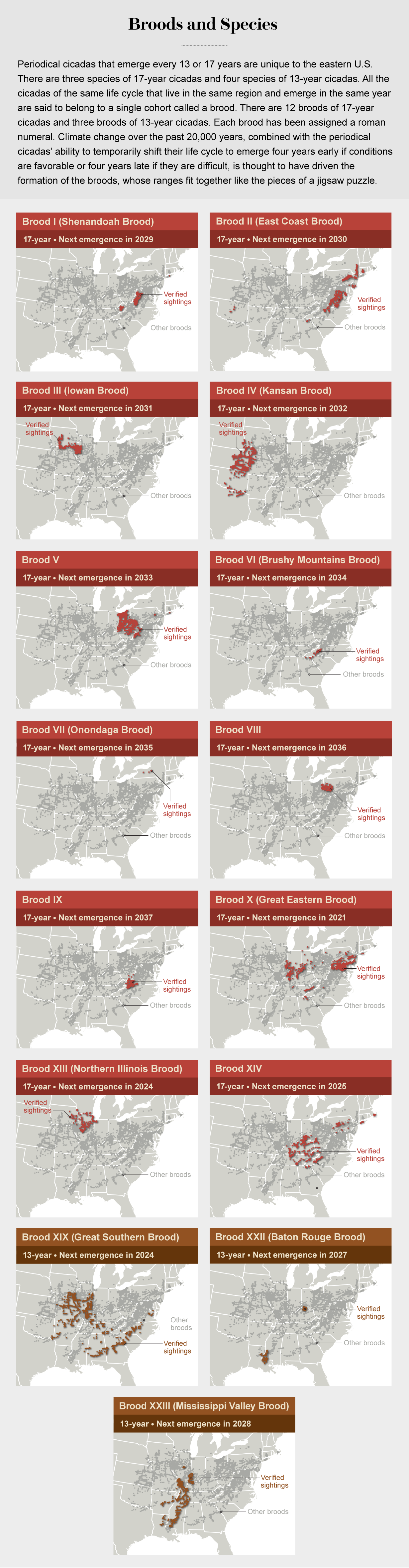 Series of maps shows the geographical ranges of 12 17-year broods and three 13-year broods of cicadas in the U.S.