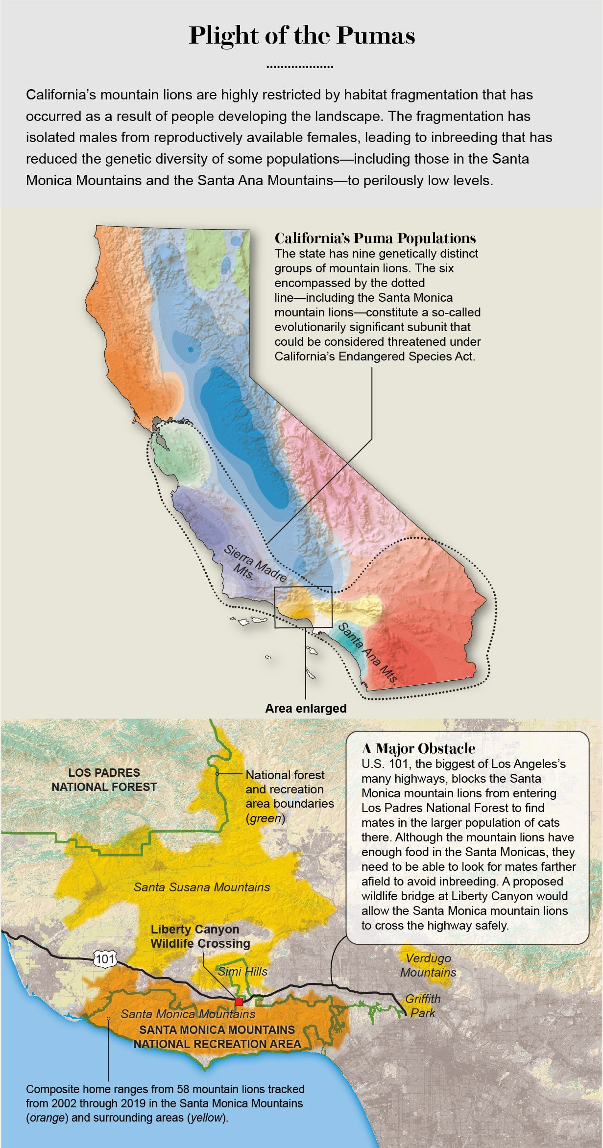 Map shows ranges of mountain lion groups in California and where U.S. 101 restricts the Santa Monica group's movement.