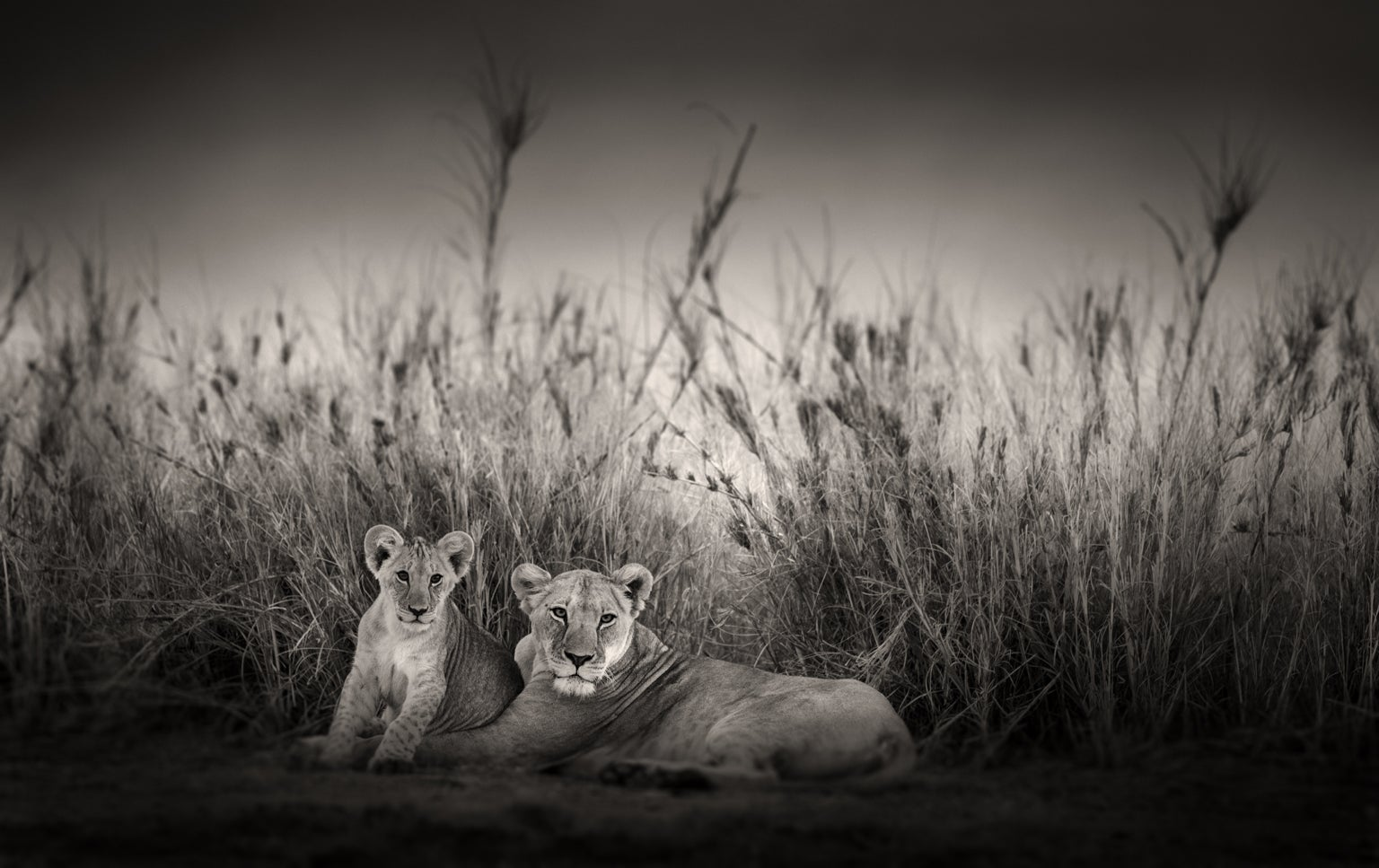 Lioness and her cub lying on grass.