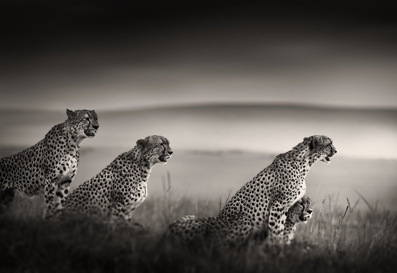 View Africa's Most Endangered Wildlife In Photos