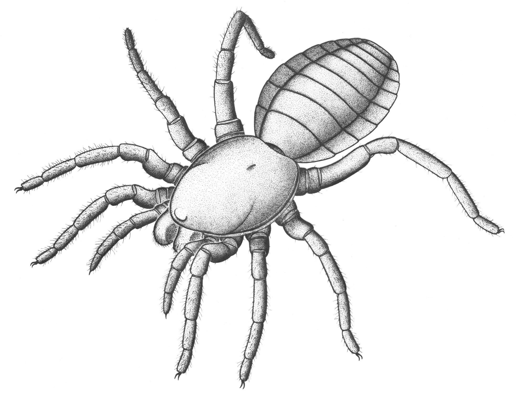 a history of tarantulas The natural history of tarantula spiders richard c gallon introduction in this article i have attempted to present a varied, fresh account of what a.
