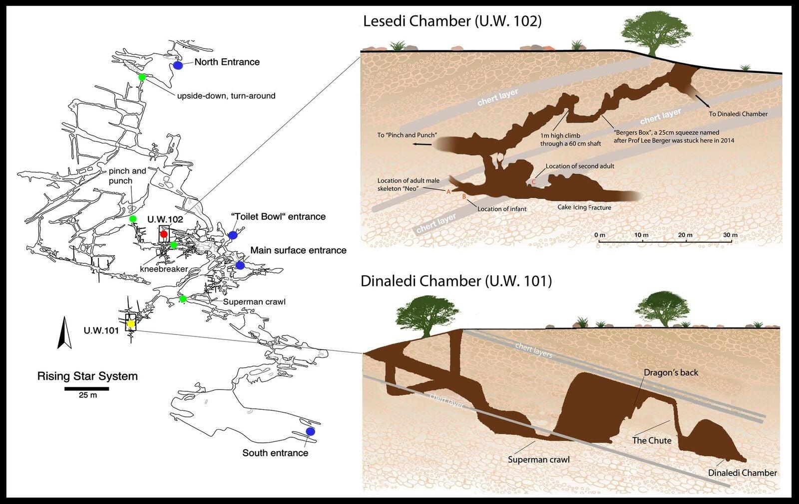 Datering av fossil evolution