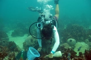 Hot water corals in the persian gulf could help save the for Clove oil fish