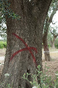 tree with red X