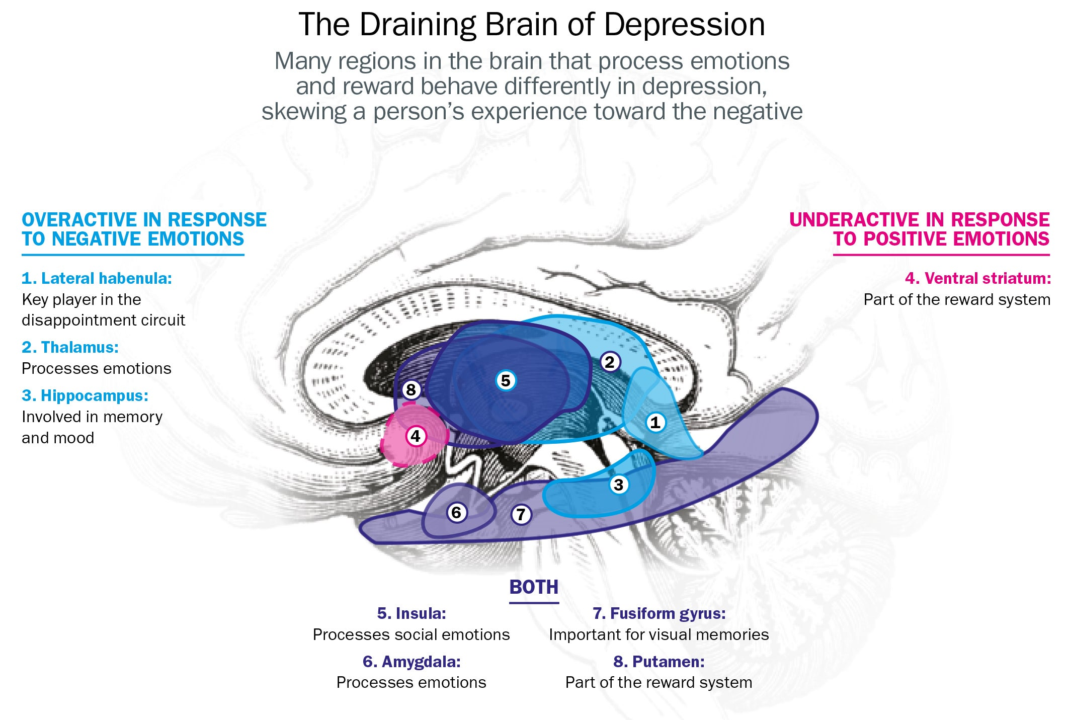 Depression Tweaks The Brains Disappointment Circuit Scientific