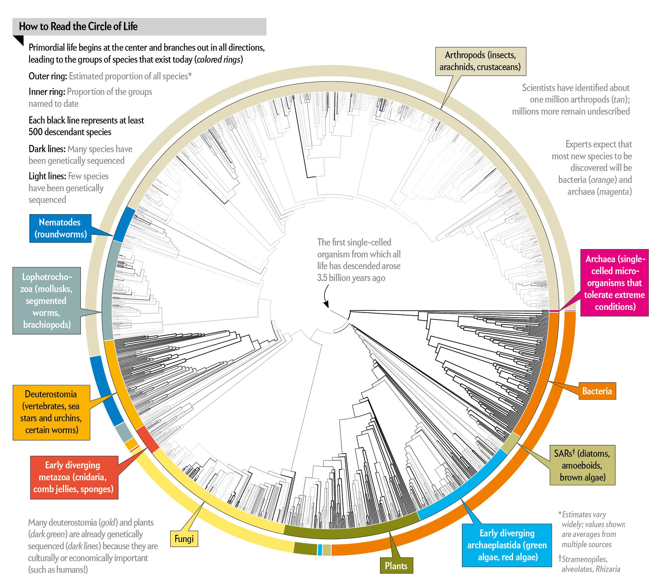 All 2.3 Million Species Are Mapped into a Single Circle of Life