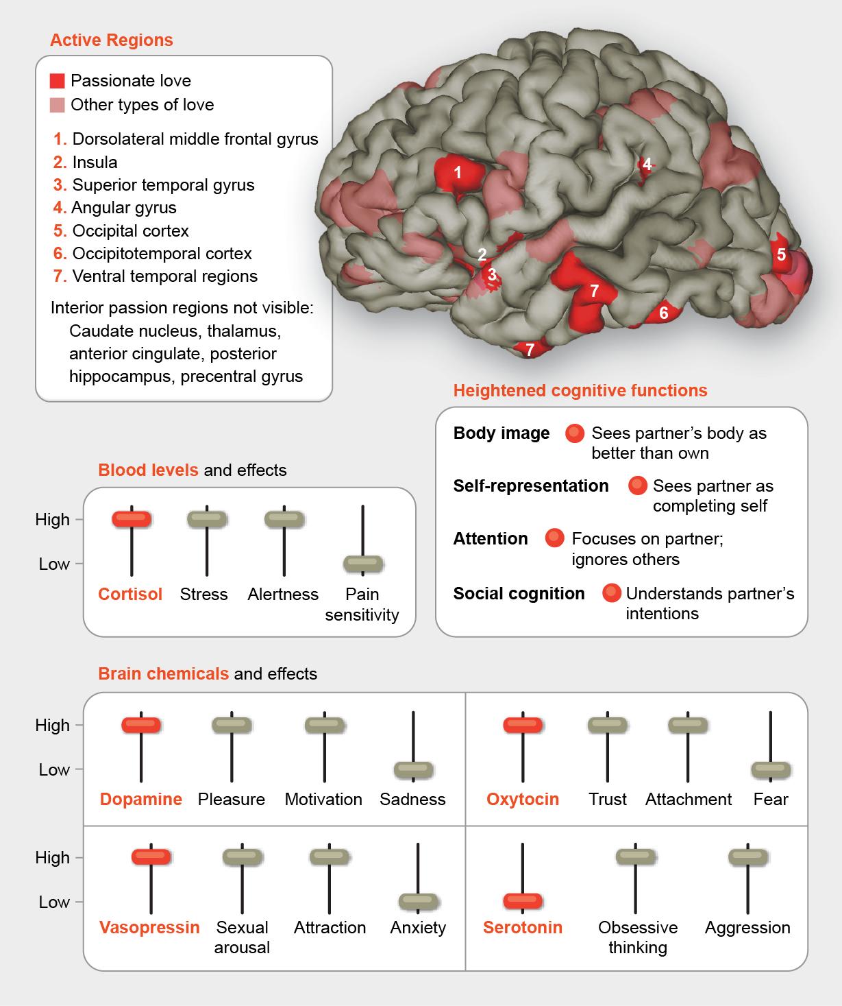 Love Brain Diagram - Product Wiring Diagrams •