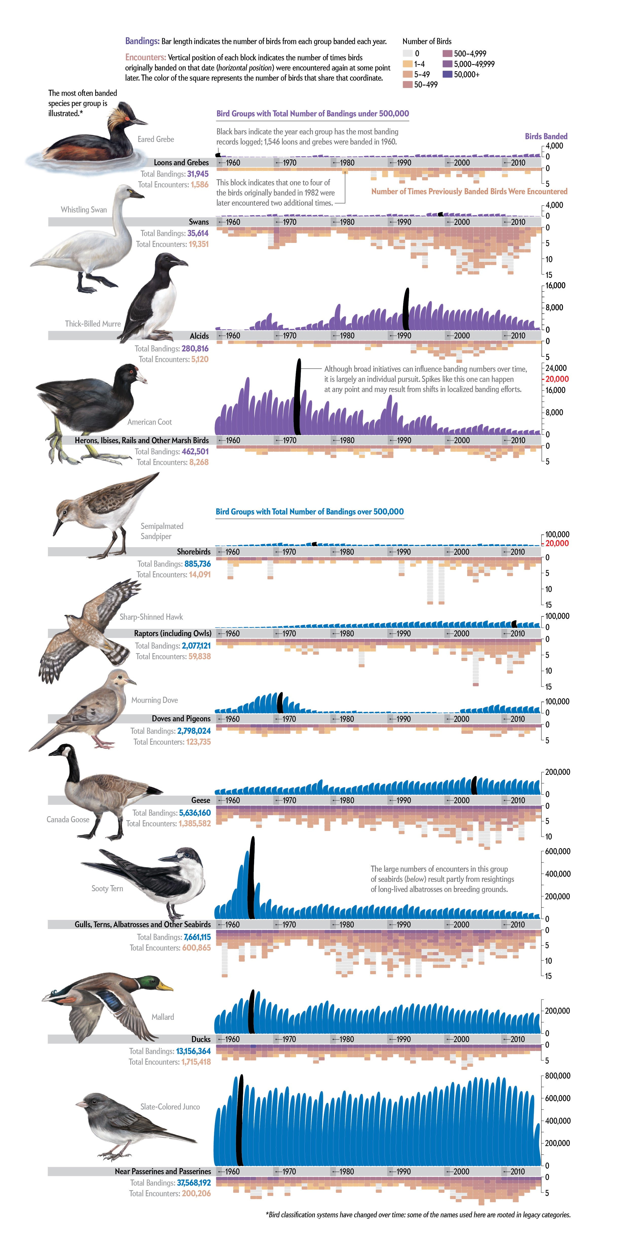 Charts show how many birds from various groups were banded each year and how often those birds were encountered later.