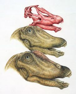 Research Reveals Dinosaurs' Rostral Nostrils - Scientific ...