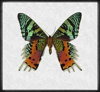 Evolution's framed insects