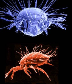MITES are among any number of allergens that can trigger sneezing