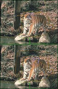 fotos comparativas del tigre en los dos estudios