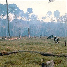 amazon-pasture