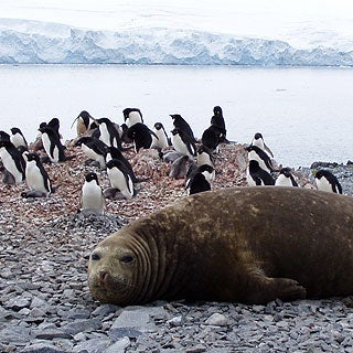 Arctic Animal Pictures on Life At The Poles  Eight Arctic Animals Facing Climate Change