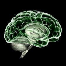 noradrenaline dopamine serotonin