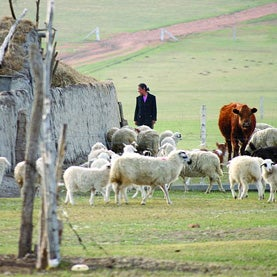 Sheep farm in northern China