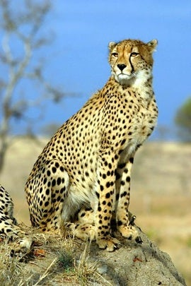 Gamble & Prosper RP Discussion 01-24-cheetah2