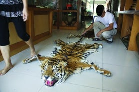 Tiger skin on sale in Myanmar