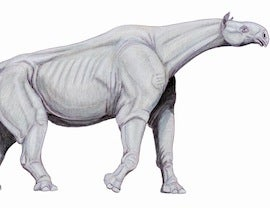 Terrestrial Mammals Share 8