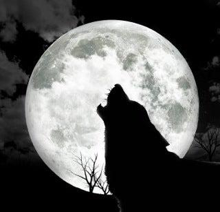Crno-bela fotografija 8-19-wolf_howl