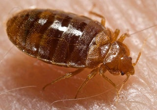 bed bug, EPA, Environmental Protection Agency, bed bug summit, pesticide