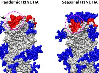 influenza structure h1n1 swine flu 1918 spanish flu