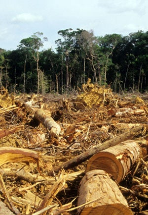 This is evident in Brazil, where the government's push to issue logging