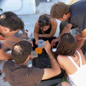 sorting trawl for squid in gulf of california