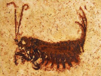 insect fossil new order larva