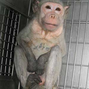 researchers speak out against anit-animal testing extremists