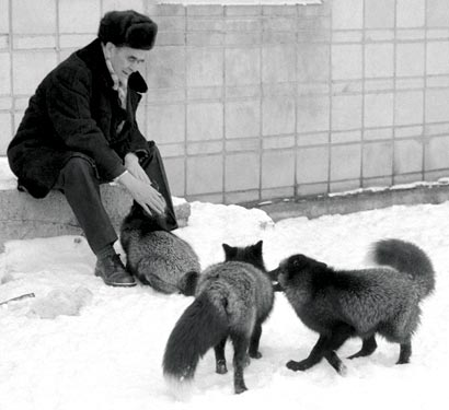 Early Canid Domestication: The Farm-Fox Experiment