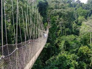 Tour Stop- Africa - Rainforest Exploration