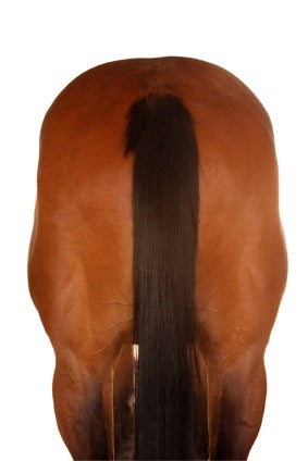 horse rear But in general the site aims to provide commentary and analysis for Wii ...