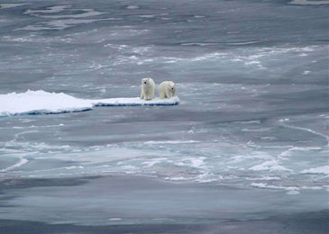 polar-bears-on-ice