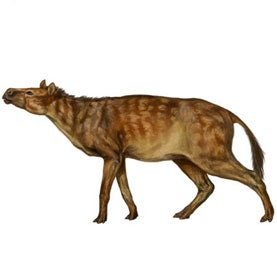 Sifrhippus small ancient horse