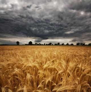 wheat-field-in-storm
