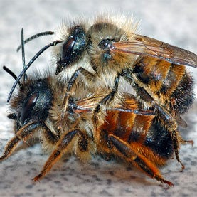 bee, citizen science