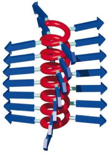 helical backbone