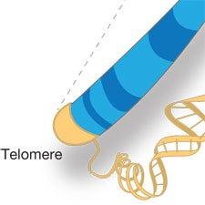 telomere genetic code
