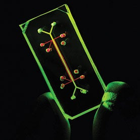 Organs-on-a-Chip for Faster Drug Development