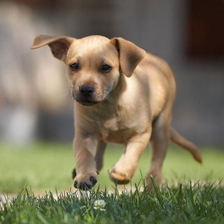 Can Dog Probiotics Be Exposed To Air