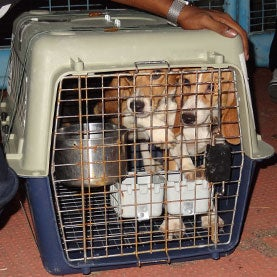 beagles in crate